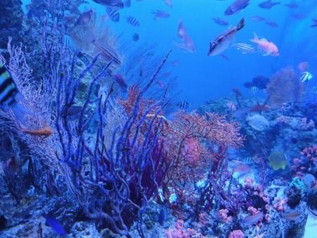 水族館 (450x338)